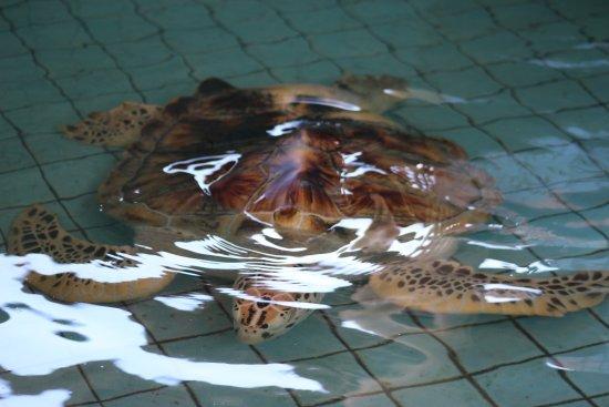 20170501_094901_large.jpg - Bild von Royal Thai Navy Third Fleet Turtle Nurse...