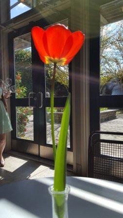 Carlton, Oregón: Wine glasses on the way plus fresh flowers
