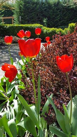 Carlton, Oregón: Flowers on the patio