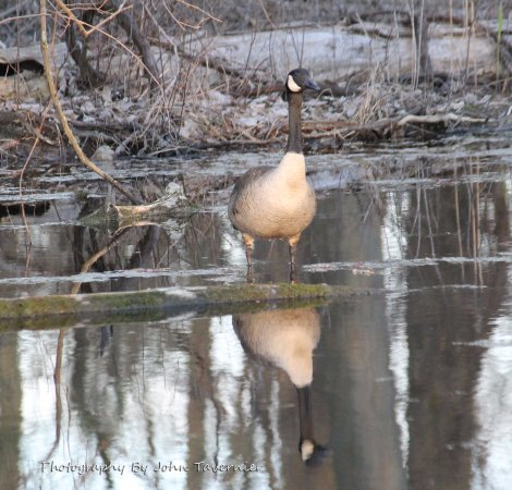 Lake St. Clair Metropark: A duck I spot on trail