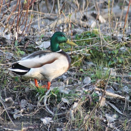 Lake St. Clair Metropark: A Duck on trail i spot