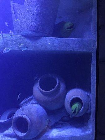 Marine Habitat at Atlantis: photo5.jpg