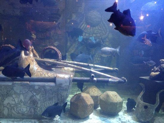 Marine Habitat at Atlantis: photo6.jpg