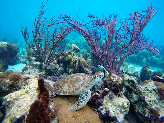 Harbour Club Villas & Marina: Snorkel and or scuba dive with turtles