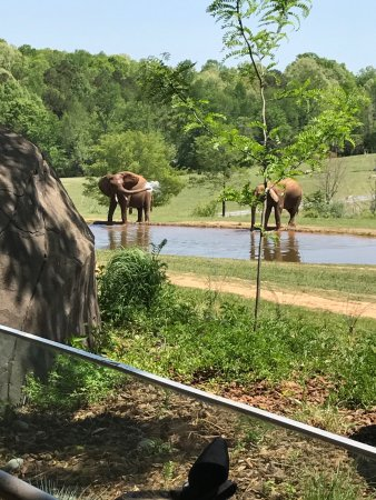 North Carolina Zoo: photo3.jpg