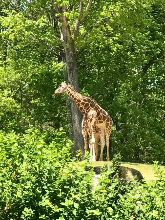 North Carolina Zoo: photo4.jpg