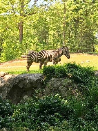 North Carolina Zoo: photo5.jpg