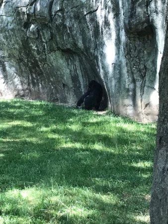 North Carolina Zoo: photo6.jpg