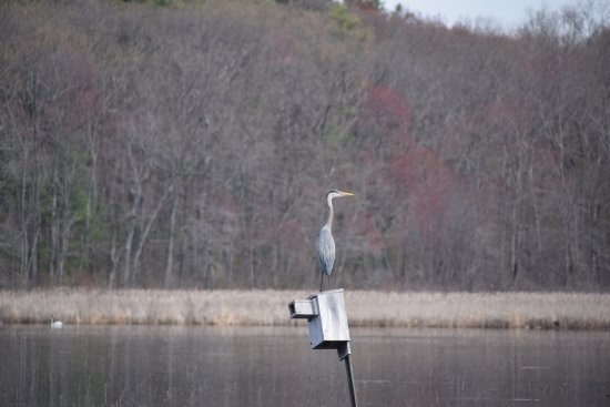 Concord, MA: photo5.jpg