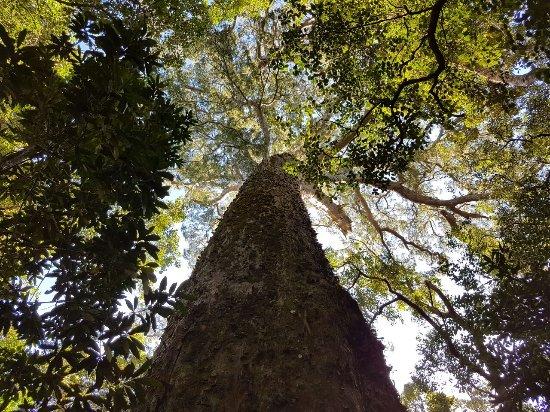 Tsitsikamma National Park, Afrika Selatan: IMG-20170426-WA0046_large.jpg