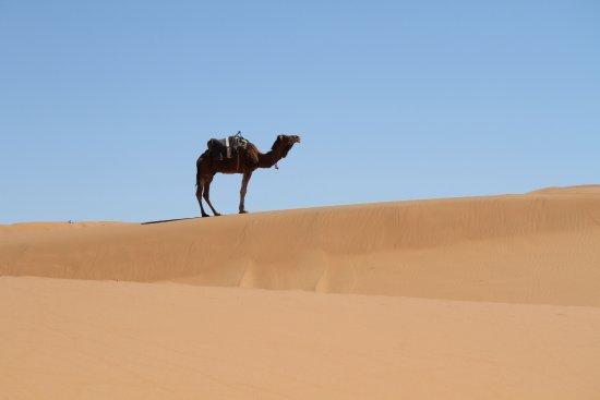 Marrakech-Tensift-El Haouz Region, Marokko: Sahara Camel riding