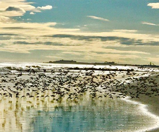 Stone Harbor Photo