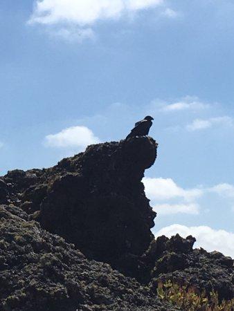 Lanzarote, Spain: photo6.jpg