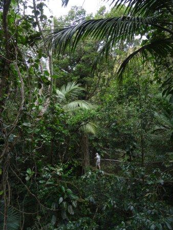 Parc des Mamelles, le Zoo de Guadeloupe: Les passerelles suspendues
