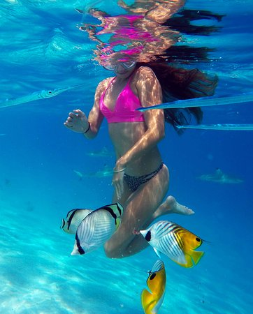 Moorea, French Polynesia: Crystal clear waters, colorful reef fish, paradisiac landscapes, join our private boat tours