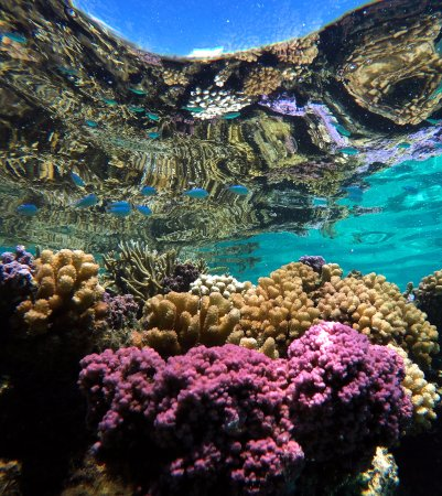 Coral reefs are the real treasure of Moorea. Discover them with our Private Reef Snorkelin