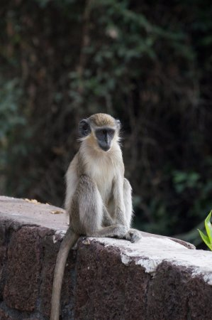 Niokolo-Koba National Park, Senegal: Plenty of wildlife to see in the park!