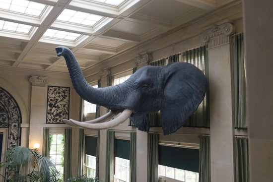 George Eastman Museum: The music room where George Eastman had his breakfast, elephant head from one of his trips to Af
