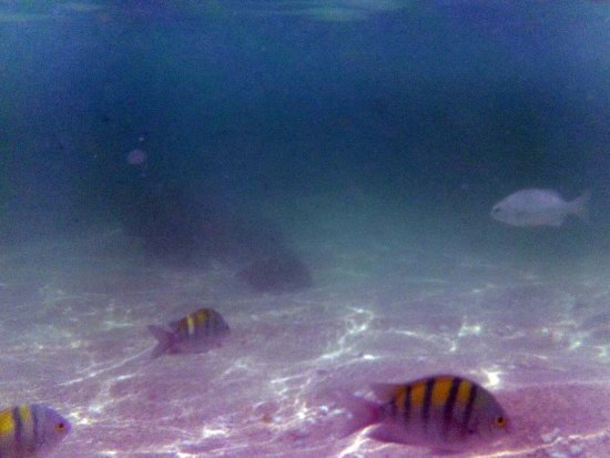 Ixtapa Island (Isla Ixtapa): Variedad de peces