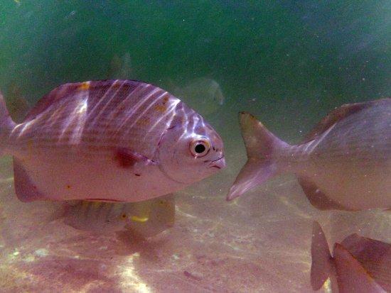 Ixtapa Island (Isla Ixtapa): Peces
