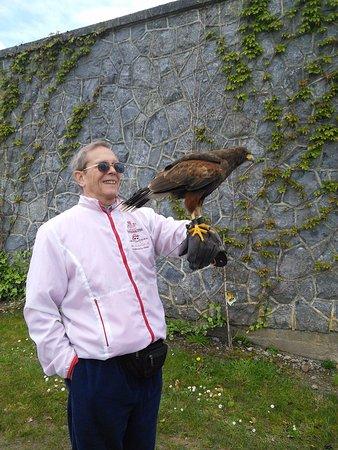 Bushypark, Irland: Falconry in walled garden