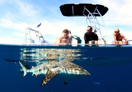 Moorea, French Polynesia: Shark tour. Meet blacktip, gray reef, lemon and nurse sharks. Marine biologist, cameraman onboar