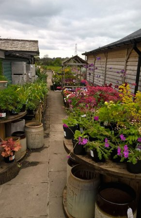 Scorton, UK: Garden centre