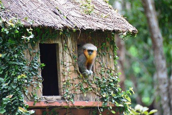 Parauapebas: Parque Zoobotânico Vale