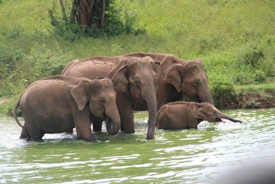 Inbound Lanka