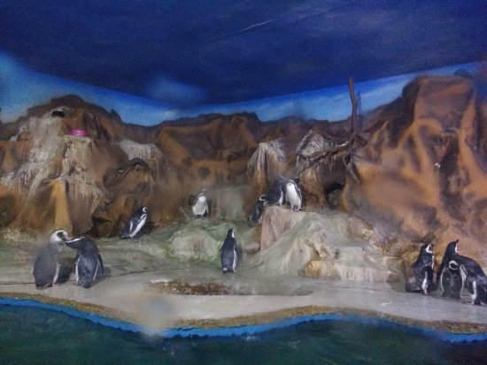 Acqua Mundo: Pinguins