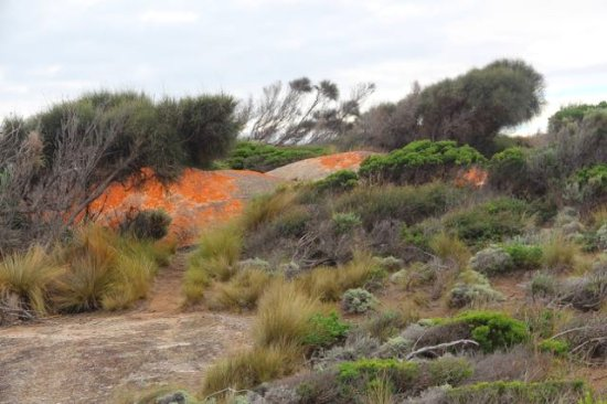 Flinders Island, Australia: Trousers Point Walk bush view