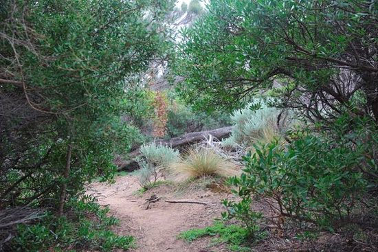 Flinders Island, Australia: Trousers Point Walk woodland