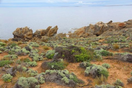 Flinders Island, Australia: Trousers Point Walk sea view