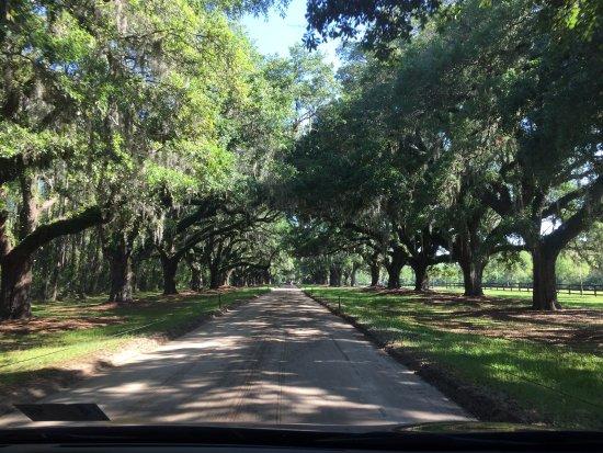 Mount Pleasant, Caroline du Sud : Boone Hall Plantation