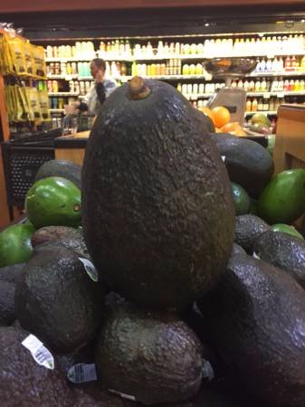 Waikoloa, HI: A really large avocado at Queen's Marketplace!