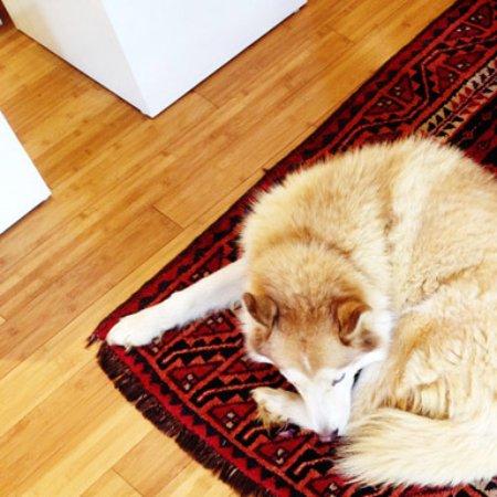 Koloa, HI: Shop Dog Caya