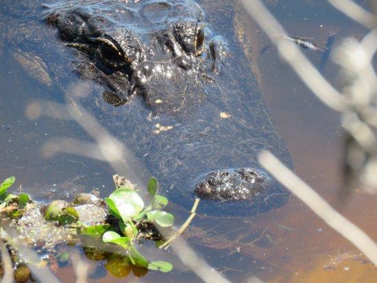 Micanopy, FL: photo7.jpg