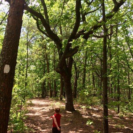 Cumming, GA: Sawnee Mountain Preserve