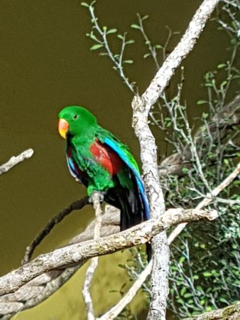 Brooklands Zoo: Beautiful colourful bird aviary