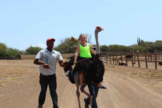 Curacao Ostrich Farm: Riding the Ostrich