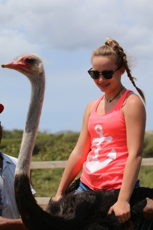 Curacao Ostrich Farm: on the Ostrich