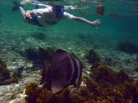 Chalets d'Anse Forbans: Batfish