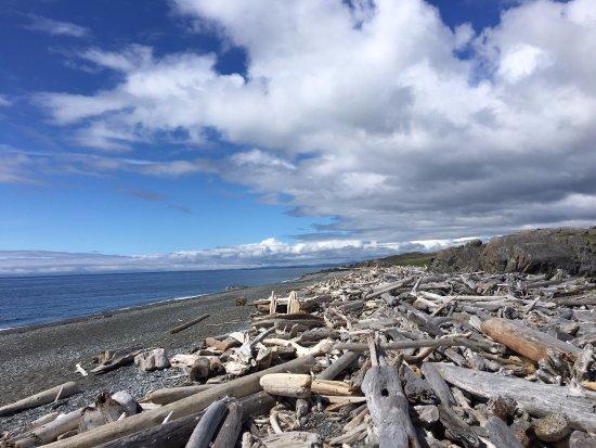 Friday Harbor, WA: Driftwood on the Shore