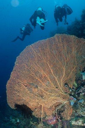 Wakatobi, Endonezya: Menyelam di Tomia