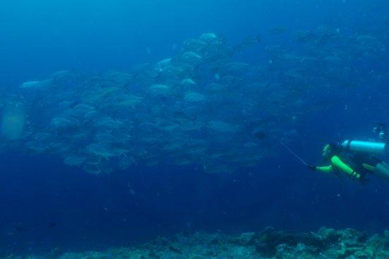 Wakatobi, Indonezja: Rombongan JT Fish