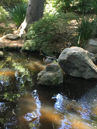 La Canada Flintridge, CA: photo8.jpg