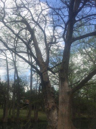 Wimberley, TX: Along the water's edge