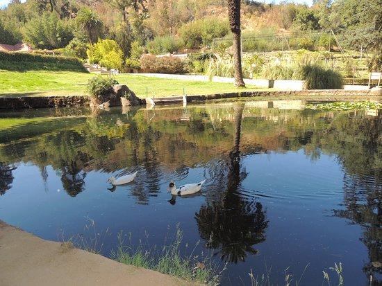 Laguna con patos picture of jardin botanico nacional for Jardin botanico vina