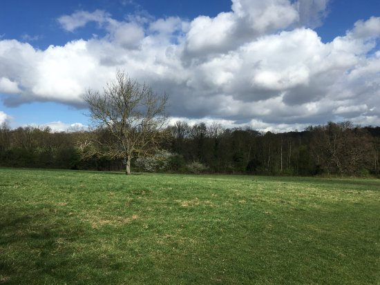 Hampstead Heath : Beautiful tree and mild sunlight