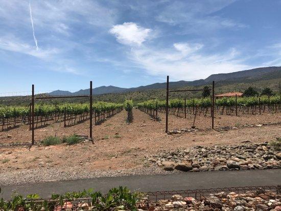Clarkdale, AZ: The Vineyards